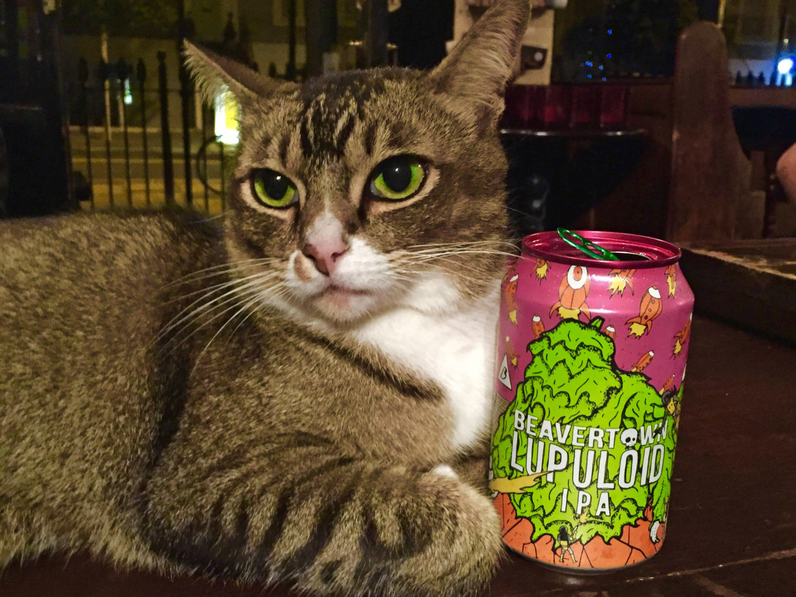 Our pub cat approves of the Lupuloid