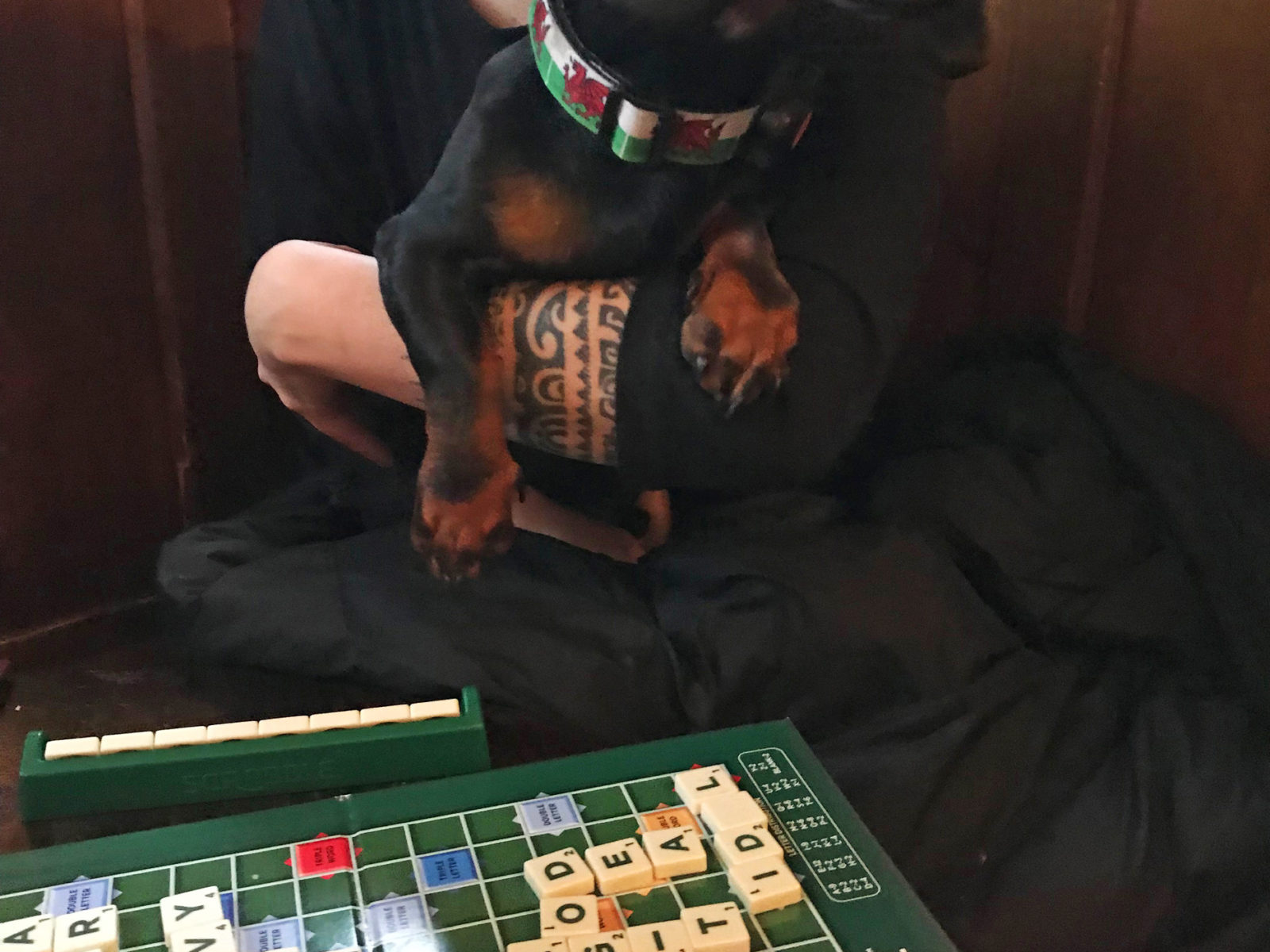 We love pub dogs and board games